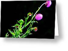 Purple Thorn Greeting Card