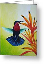 Purple-throated Carib And Bird Of Paradise Greeting Card
