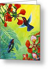 Purple-throated Caribs And Flamboyant Greeting Card