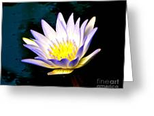 Purple Tipped Water Lily Greeting Card