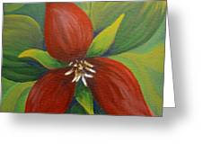 Purple Trillium Greeting Card