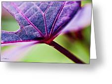 Purple Veins Greeting Card
