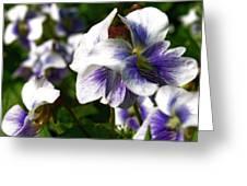 Purple Veins Greeting Card by Scott Hovind