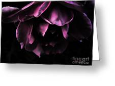 Purple Velvet Rose Greeting Card