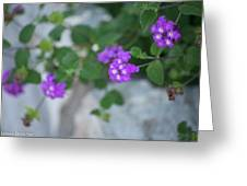 Purple Verbena Greeting Card