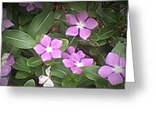 Purple Vintas Flower Photograph Greeting Card