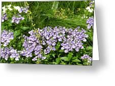 Purple Wall Greeting Card