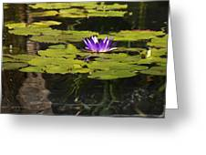 Purple Water Lilly Distortion Greeting Card