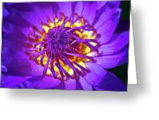 Purple Water Lily Macro Greeting Card