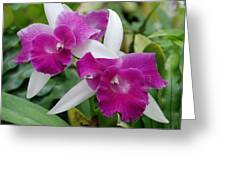 Purple White Orchids Greeting Card