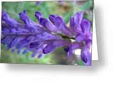 Purple Wildflower Greeting Card