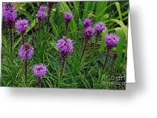 Purple Wildflowers Greeting Card
