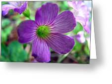 Purple Wildflowers Macro 1 Greeting Card