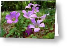 Purple Wildflowers Macro 2 Greeting Card
