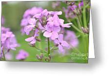 Purple Wildflowers Two Greeting Card