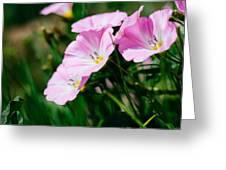 Purple Wildlfowers Greeting Card