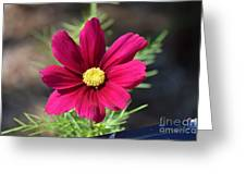 Purple Wood Aster  Greeting Card