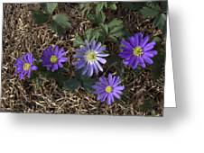 Purple Yard Flowers Greeting Card