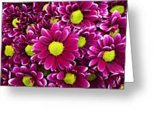 Purple Yellow Flowers Greeting Card