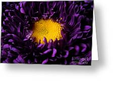 Purples - Zooming To The Center Greeting Card