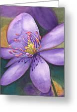 Purple's Passion Greeting Card