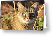 Purr-fect Kitty Cat Friend Greeting Card