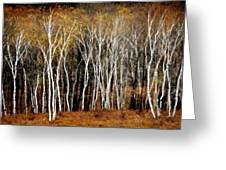 Quabbin Birches Greeting Card