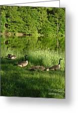 Quack Quack Quack Goes The Geese Greeting Card