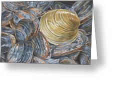 Quahog On Clams Greeting Card