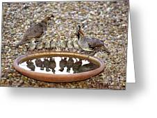 Quail Family Gathering Az Greeting Card