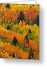 Quaking Aspen And Ponderosa Pine Trees Greeting Card