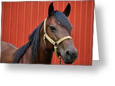Quarter Horse Greeting Card by Sandy Keeton