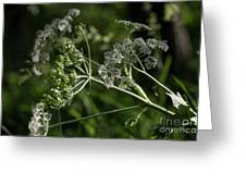 Queen Anne Lace In The Wind Greeting Card