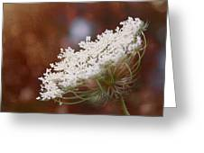 Queen Anne's Lace 3 Greeting Card
