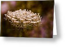Queen Anne's Lace 4 Greeting Card