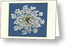 Queen Anne's Lace Flower Greeting Card