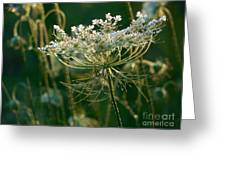 Queen Anne's Lace In Green Horizontal Greeting Card