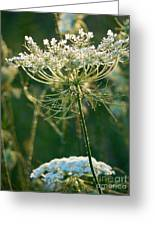 Queen Anne's Lace In Green Vertical Greeting Card