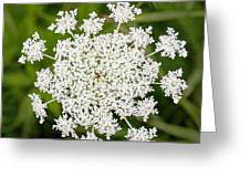Queen Anne's Lace No 2 Greeting Card