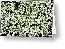 Queen Anne's Lace Patterns Greeting Card