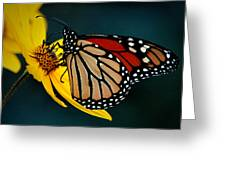 Queen Monarch 2 Greeting Card