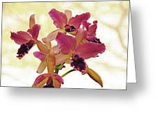 Queen Of Orchids Greeting Card
