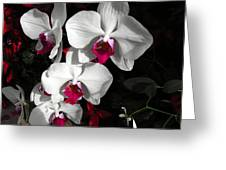 Queen Orchid Greeting Card