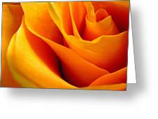Queen Rose Greeting Card