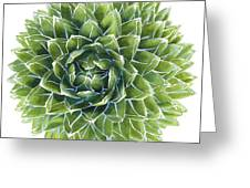 Queen Victoria Agave Succulent Greeting Card