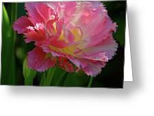 Queensland Tulip Greeting Card