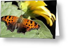 Question Mark Butterfly Greeting Card