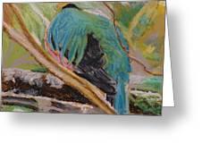 Quetzal In Costa Rica Greeting Card