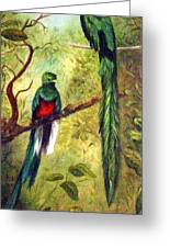 Quetzels Greeting Card