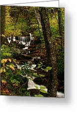 Quiet Autumn Stream Greeting Card